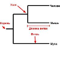 2015-02-04amoeba169x
